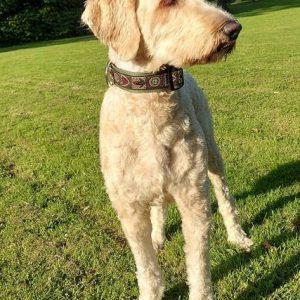 Halsband-hond-handgemaakt-hondenhalsband-handgemaakte-hondenhalsbanden