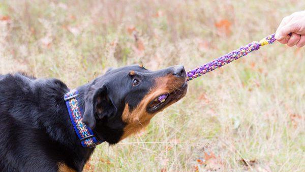 apporteer speelgoed hond - sterke hondenspeeltjes – hondenspeelgoed - trekspeeltjes