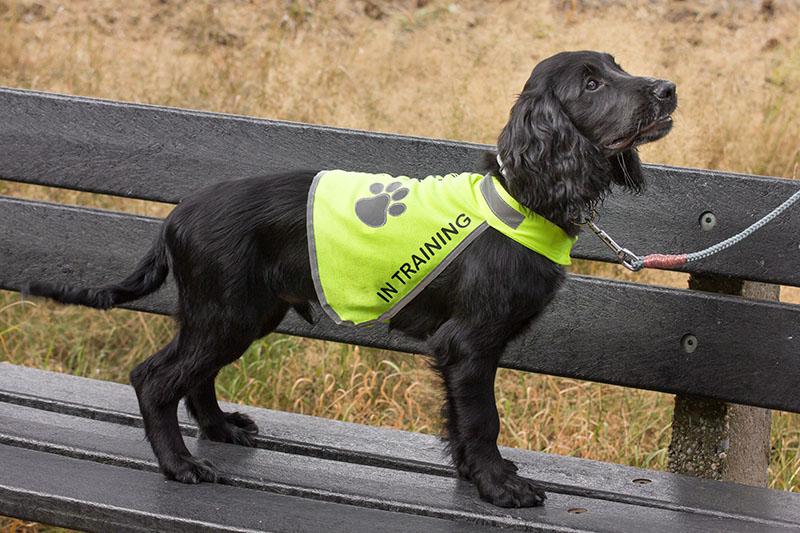 reflecterend-hondenhesje-trainingsvest-hond-hulphond-hesje