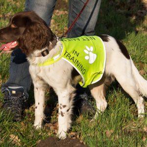 Honden-trainingsvest-trainingsvest_hond-reflecterend-hondenhesje_hesje-hulphond