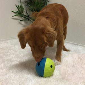 Nina Ottosson hondenpuzzels - denkspellen hond – hondenpuzzel – honden puzzel voor honden